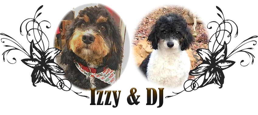 Izzy and DJ Paired Bernedoodle Breeding