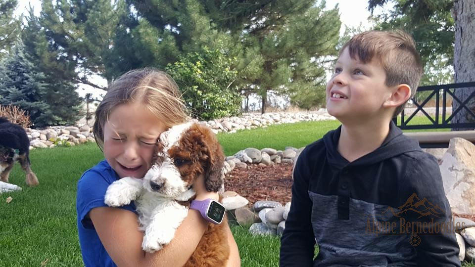 Puppy Pick-Up at the Alpine Bernedoodles Ranch