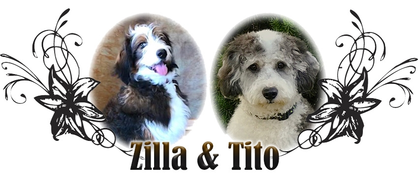 Zilla and Tito Paired Breeding