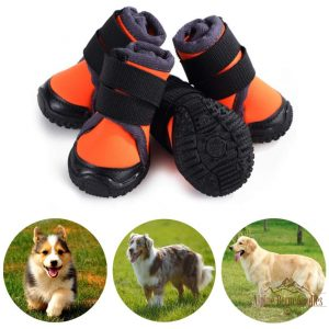 Hiking Boots for Alpine Bernedoodles