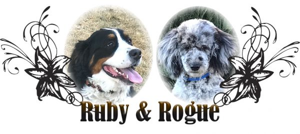 Ruby and Rogue Breeding