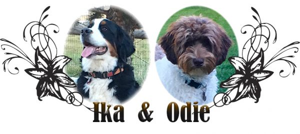 Ika and Odie Paired Breeding