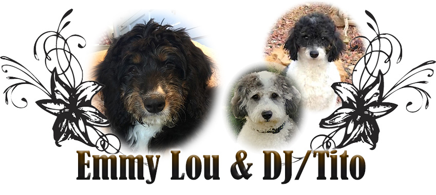 Emmy Lou, DJ and Tito Paired Breeding