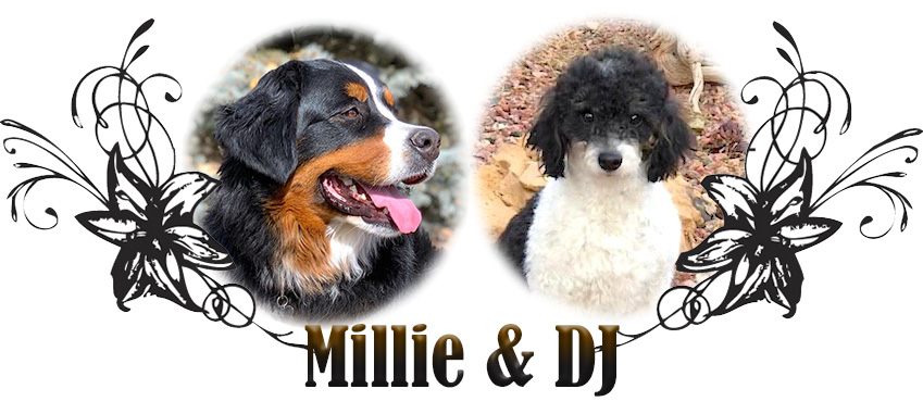 Millie and DJ Paired Breeding