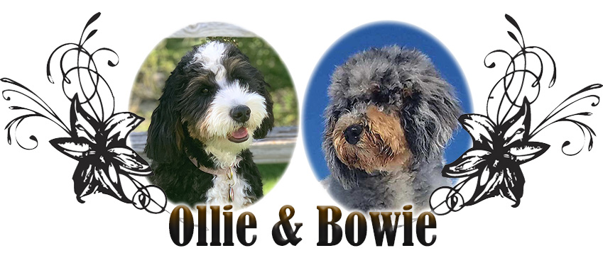 Ollie and Bowie Paired Breeding