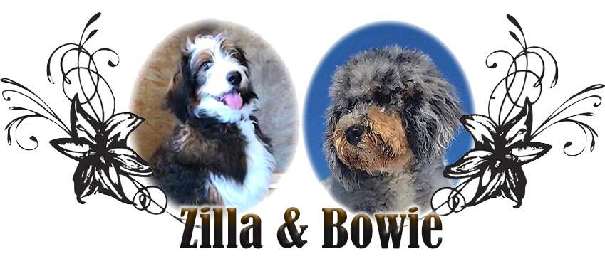 Zilla and Bowie Paired Breeding