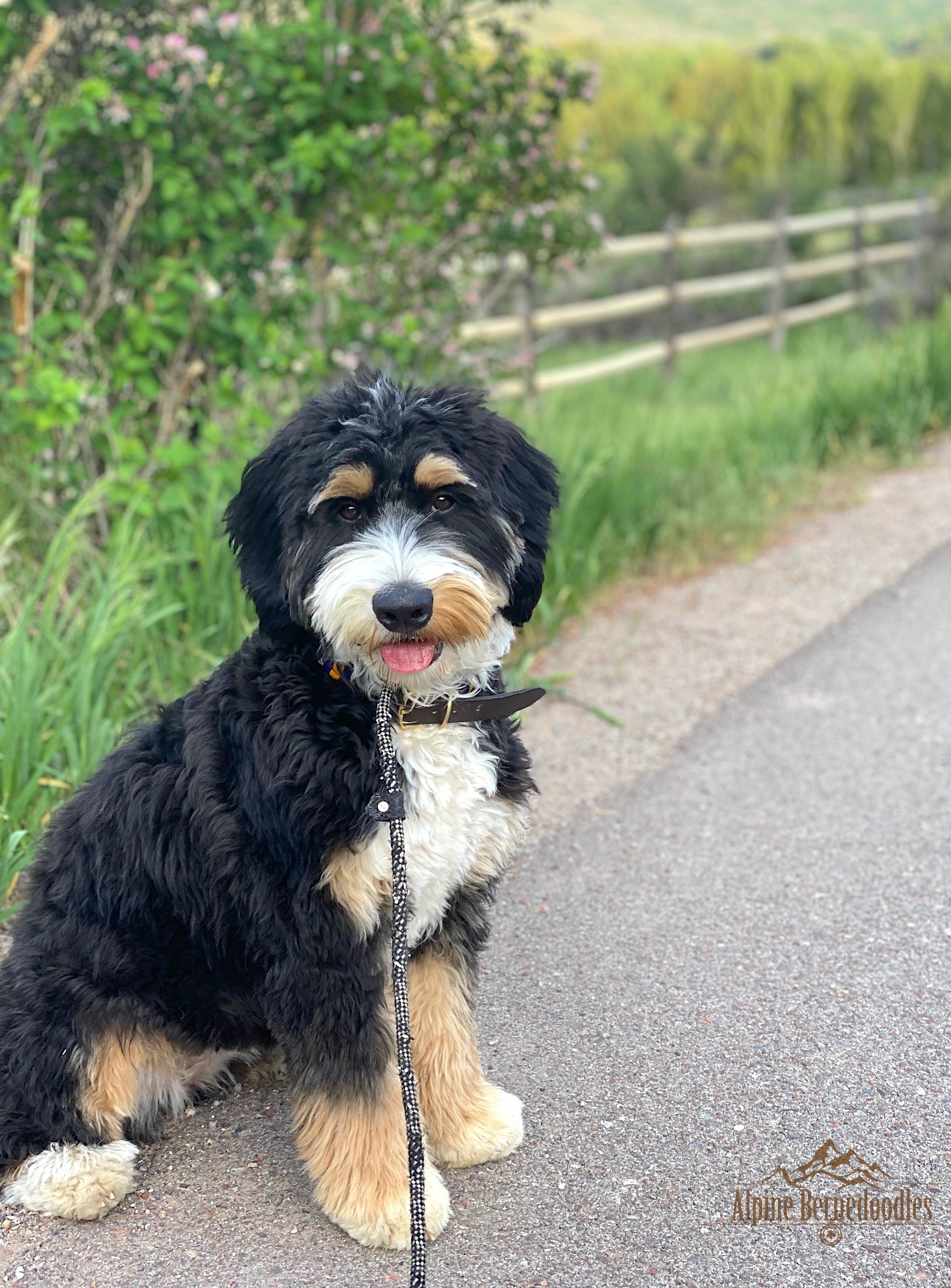 Lucy going for a walk