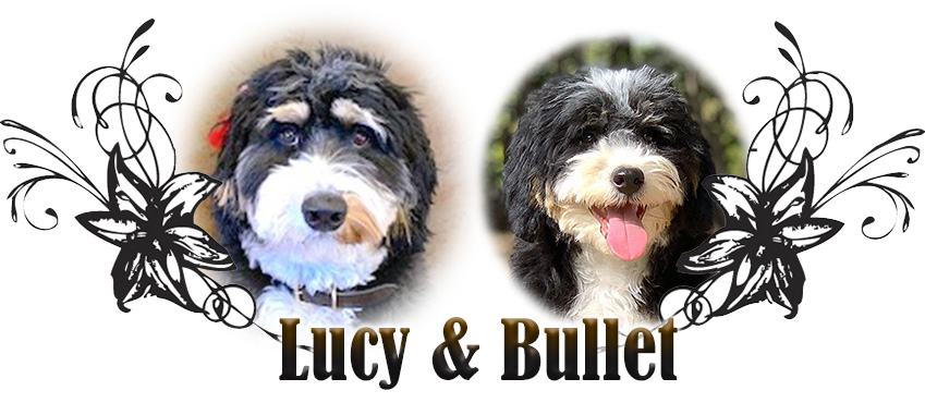 Lucy and Bullet Paired Breeding