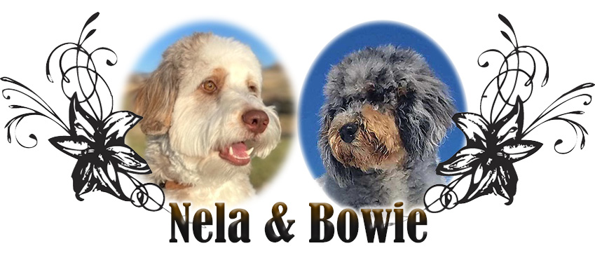 Nela and Bowie Paired Breeding